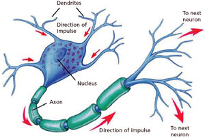 Researchers have found the nerve responsible for pleasure neuropathy occur in the peripheral nervous system that damage the extensions of nerve cells in this way nerves unable to bring the exact message to the ccuart Choice Image